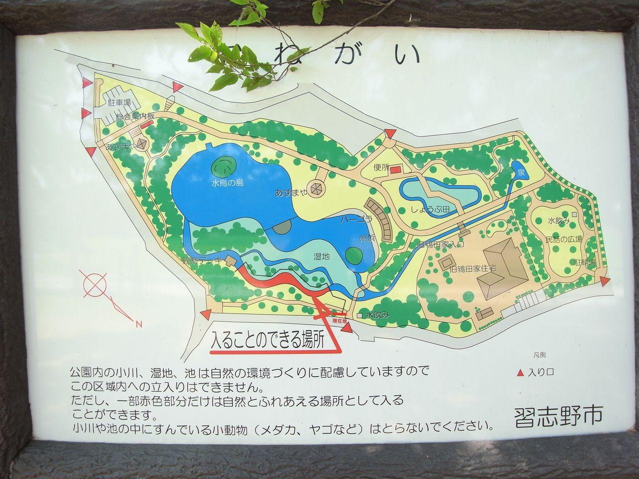 自然が残されている、実籾本郷公園